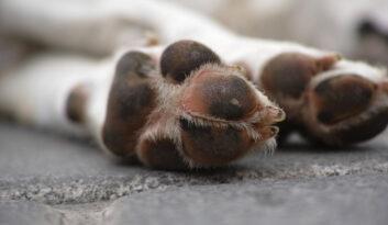 Ubezpieczenie od skutków pogryzienia przez agresywnego psa